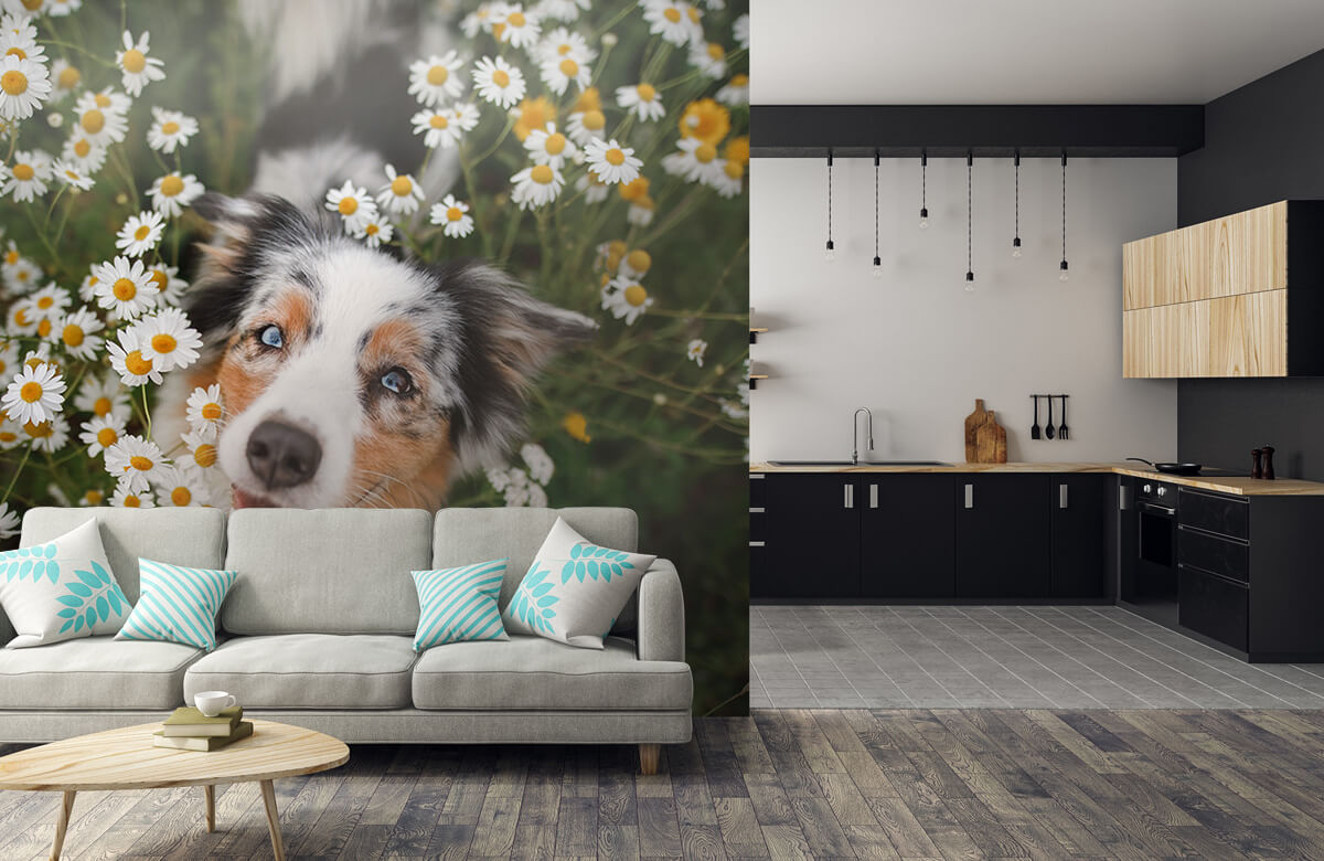 Dieren Australische herder tussen de bloemen 1
