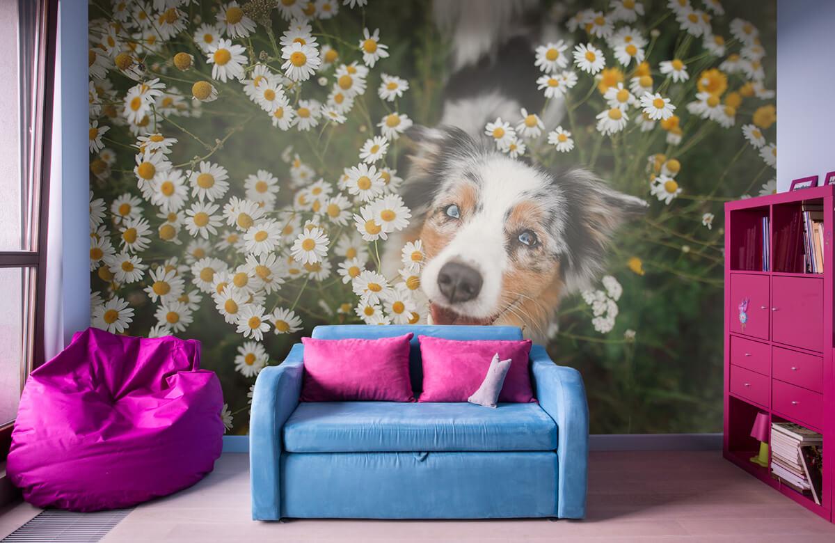 Dieren Australische herder tussen de bloemen 10