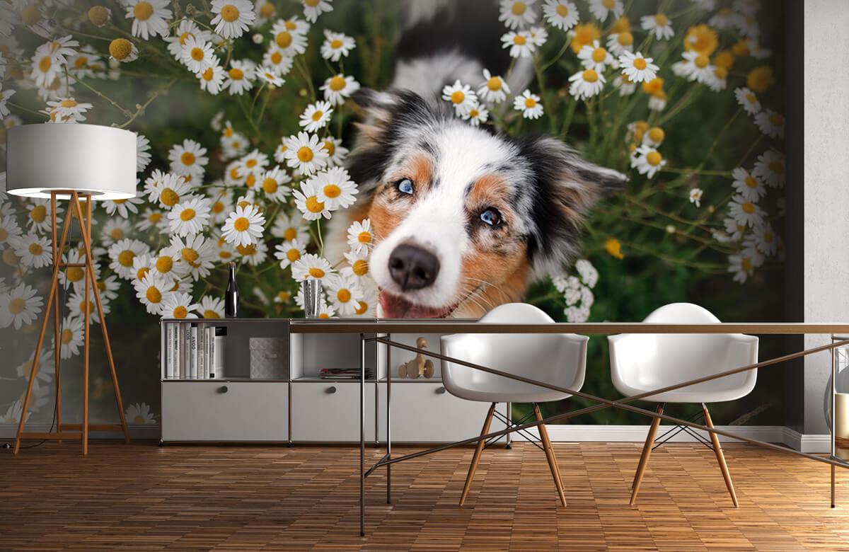Dieren Australische herder tussen de bloemen 11