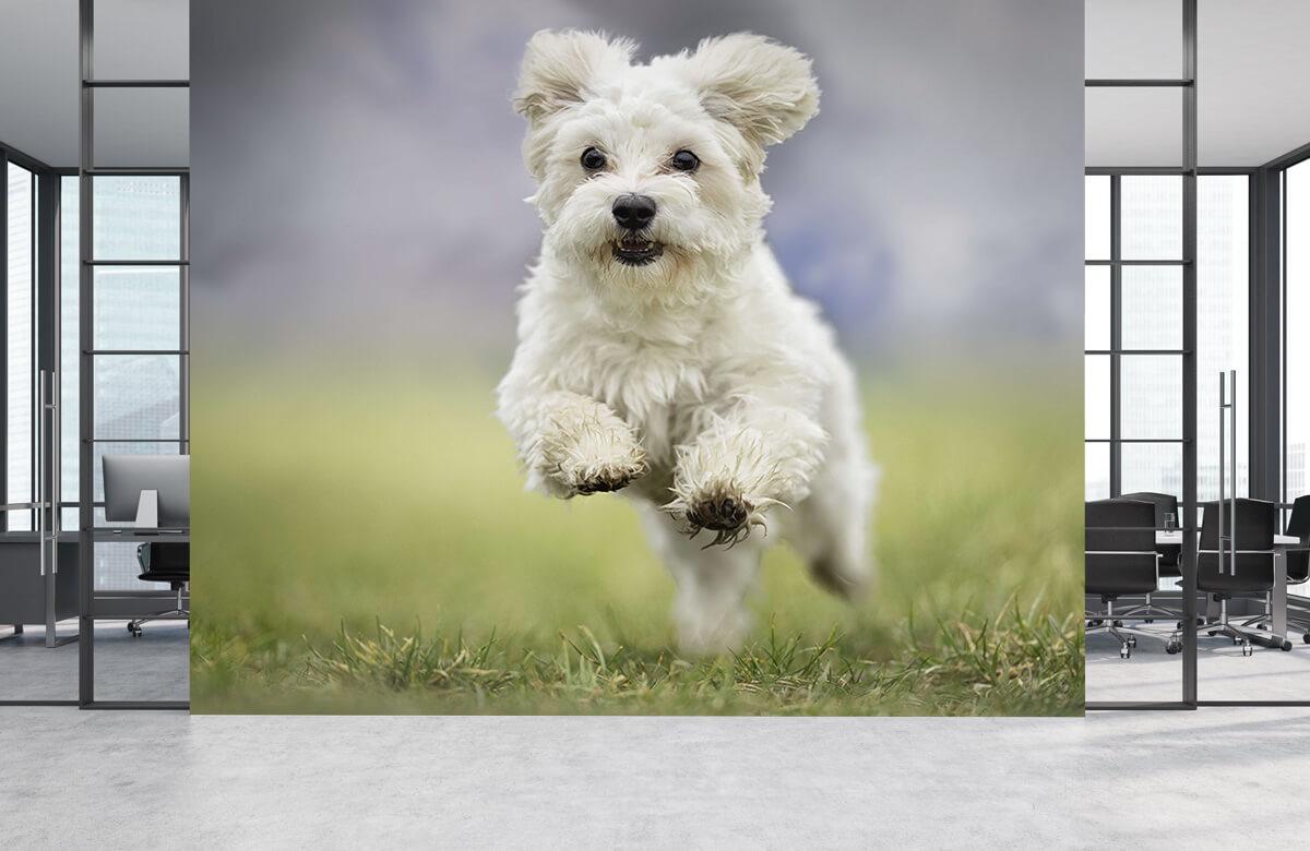 Dieren Rennende hond 1
