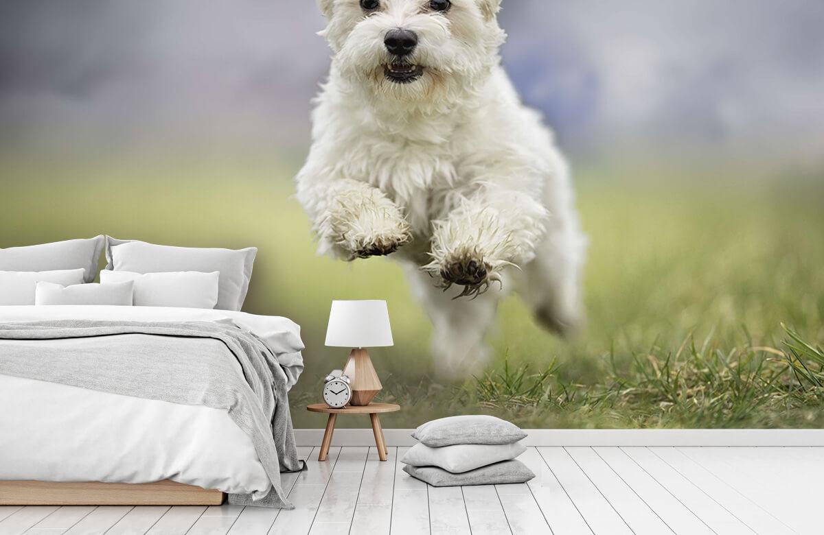 Dieren Rennende hond 7