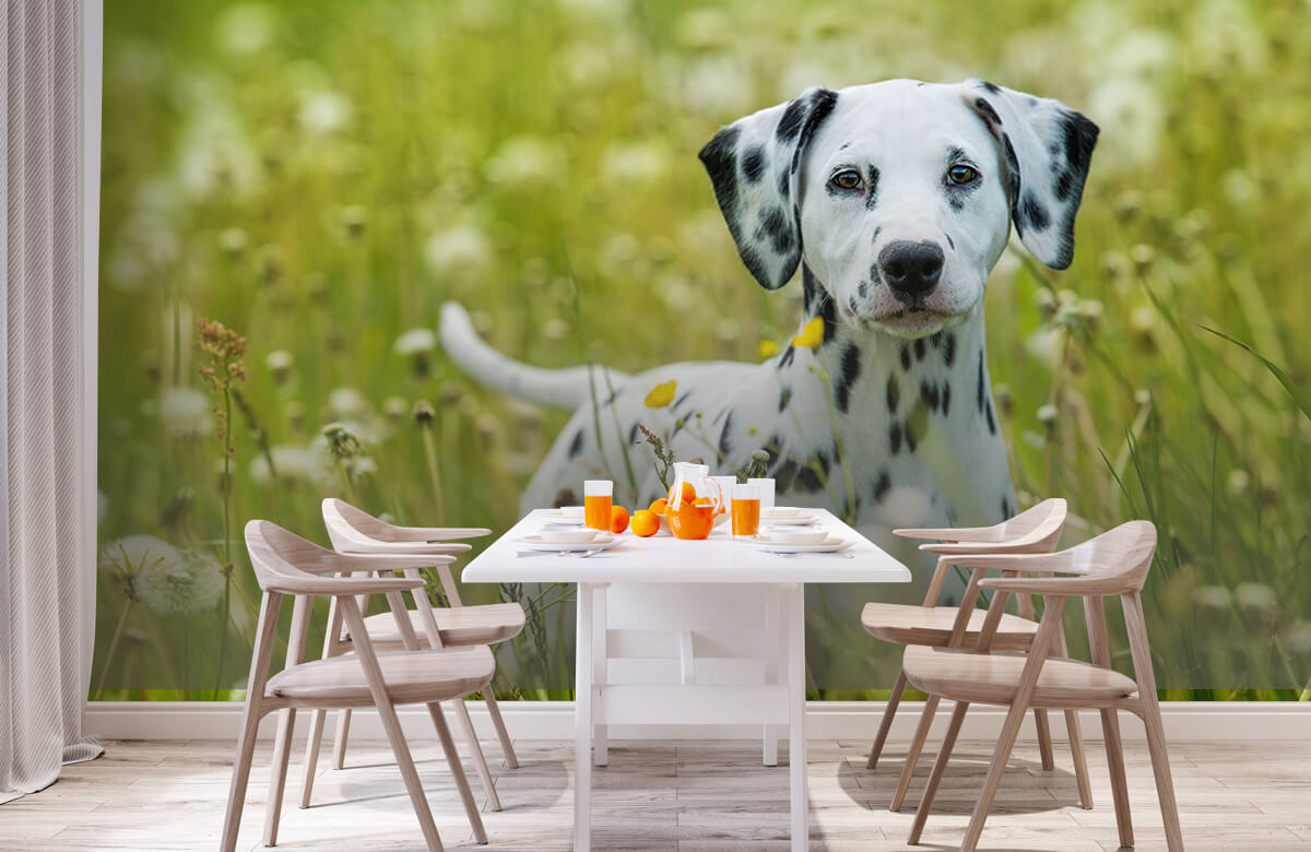 Dieren Dalmatiër 1