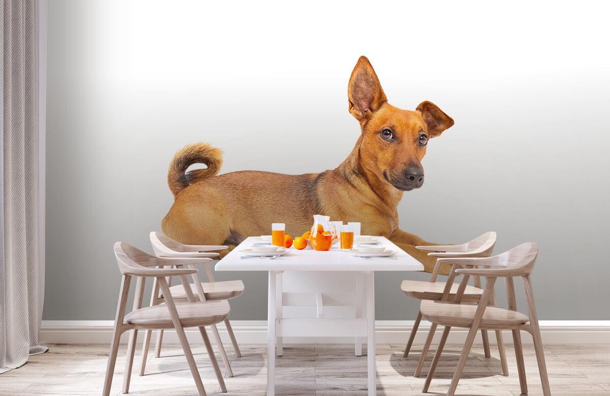 Dieren Schattige hond 2
