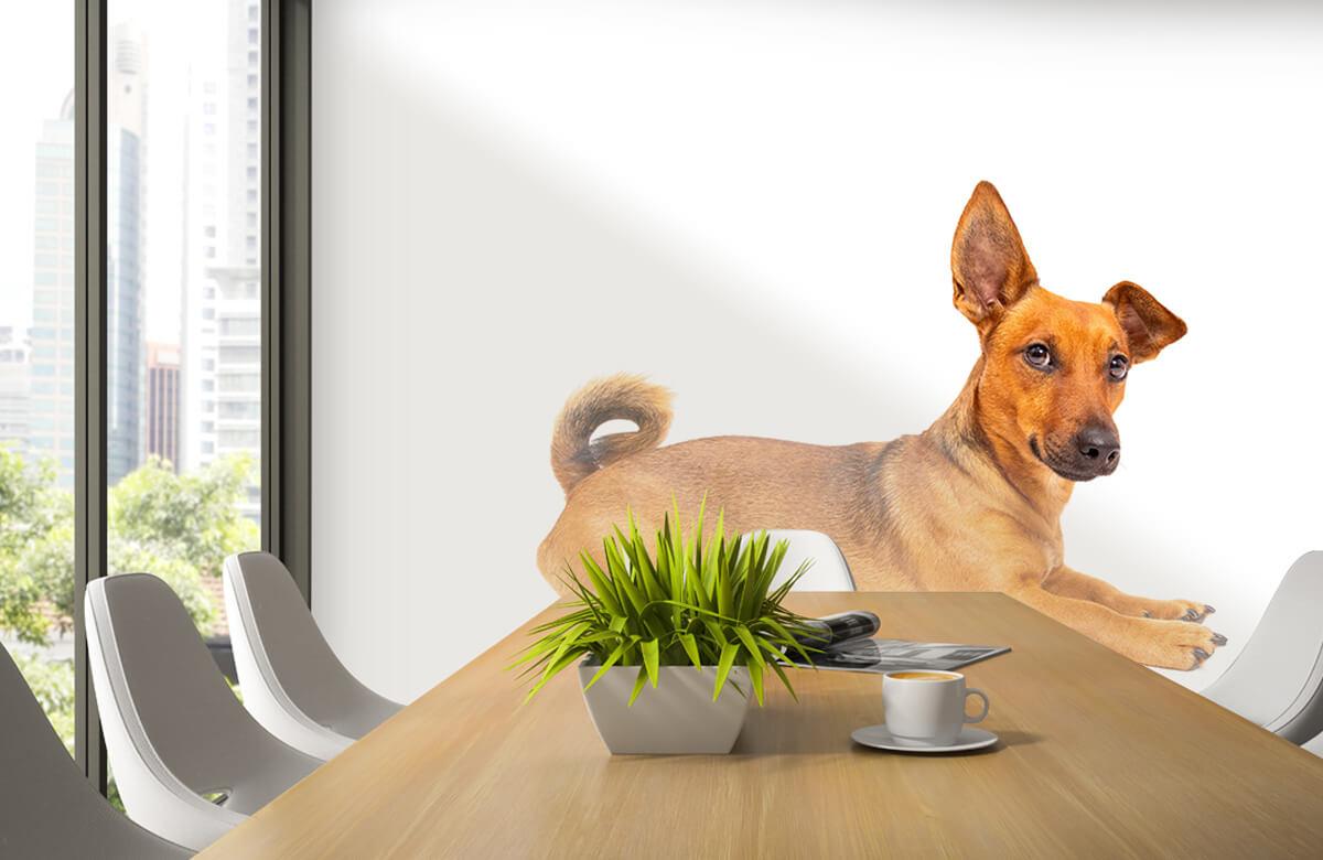 Dieren Schattige hond 3