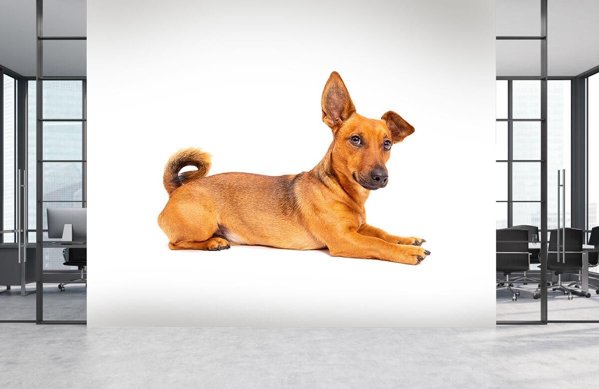 Dieren Schattige hond 4