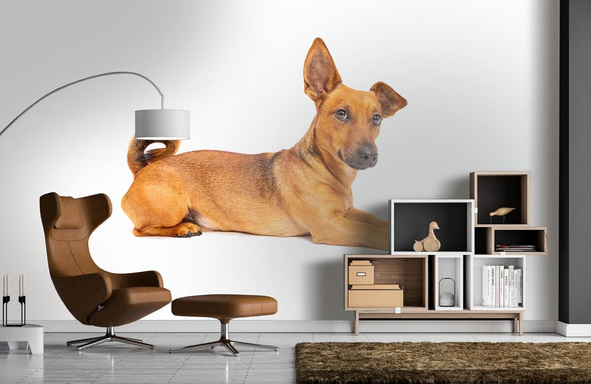 Dieren Schattige hond 5