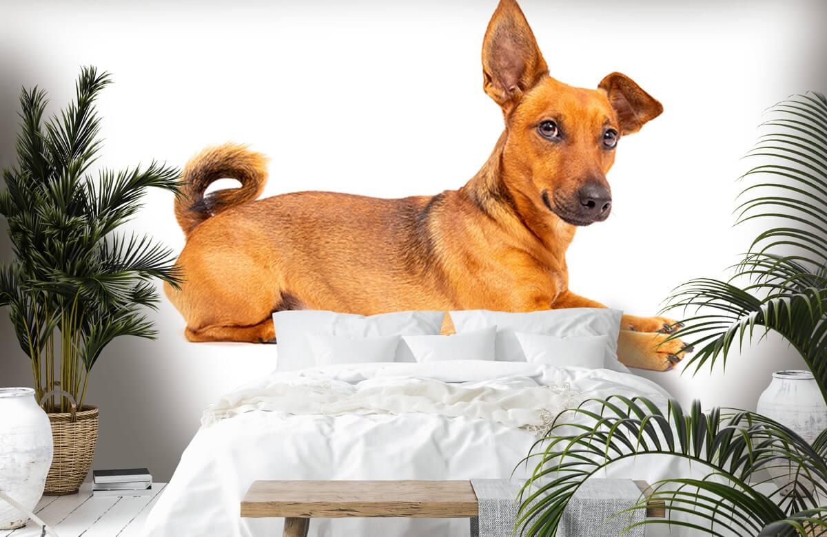 Dieren Schattige hond 1