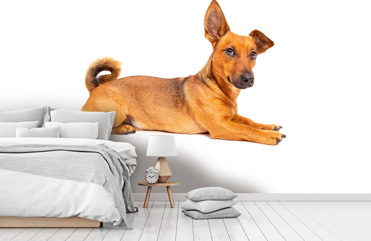 Dieren Schattige hond 7