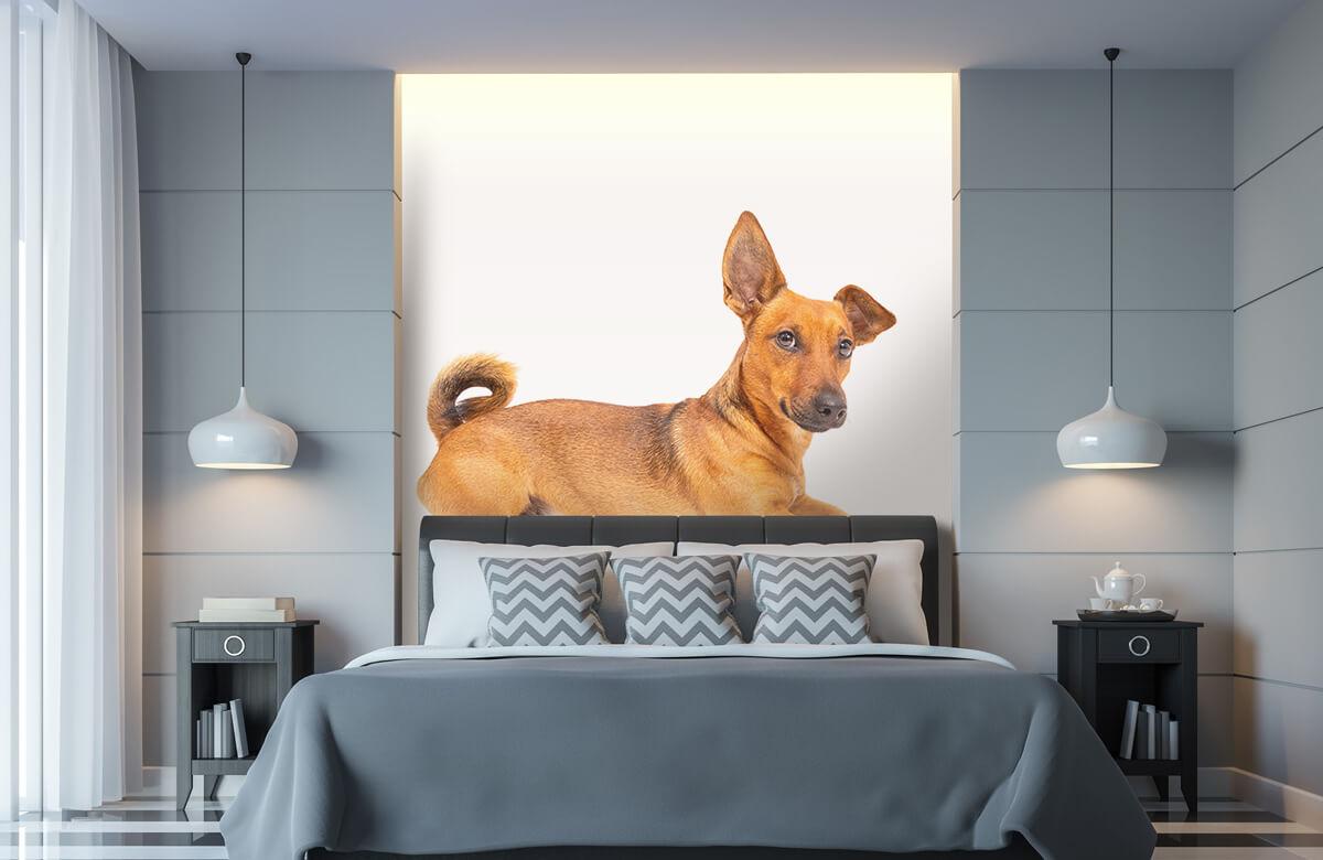 Dieren Schattige hond 8
