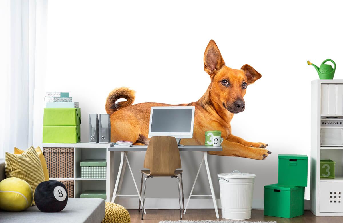 Dieren Schattige hond 9