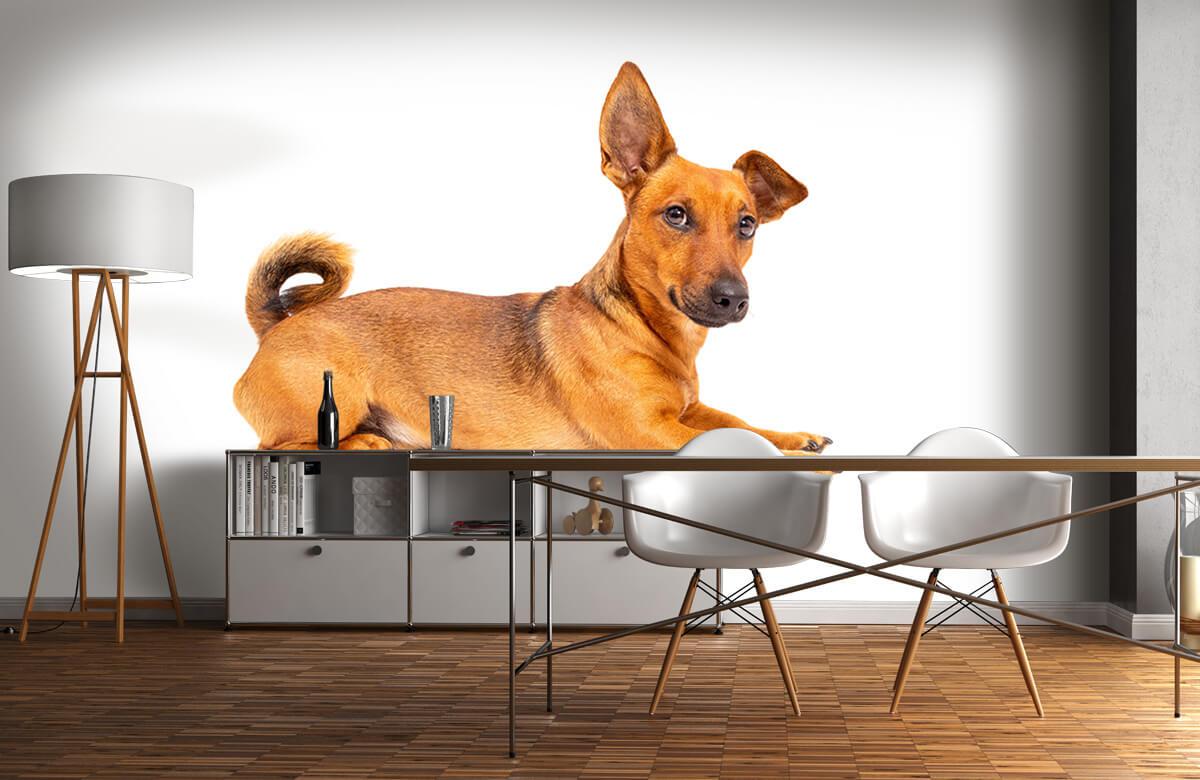 Dieren Schattige hond 11