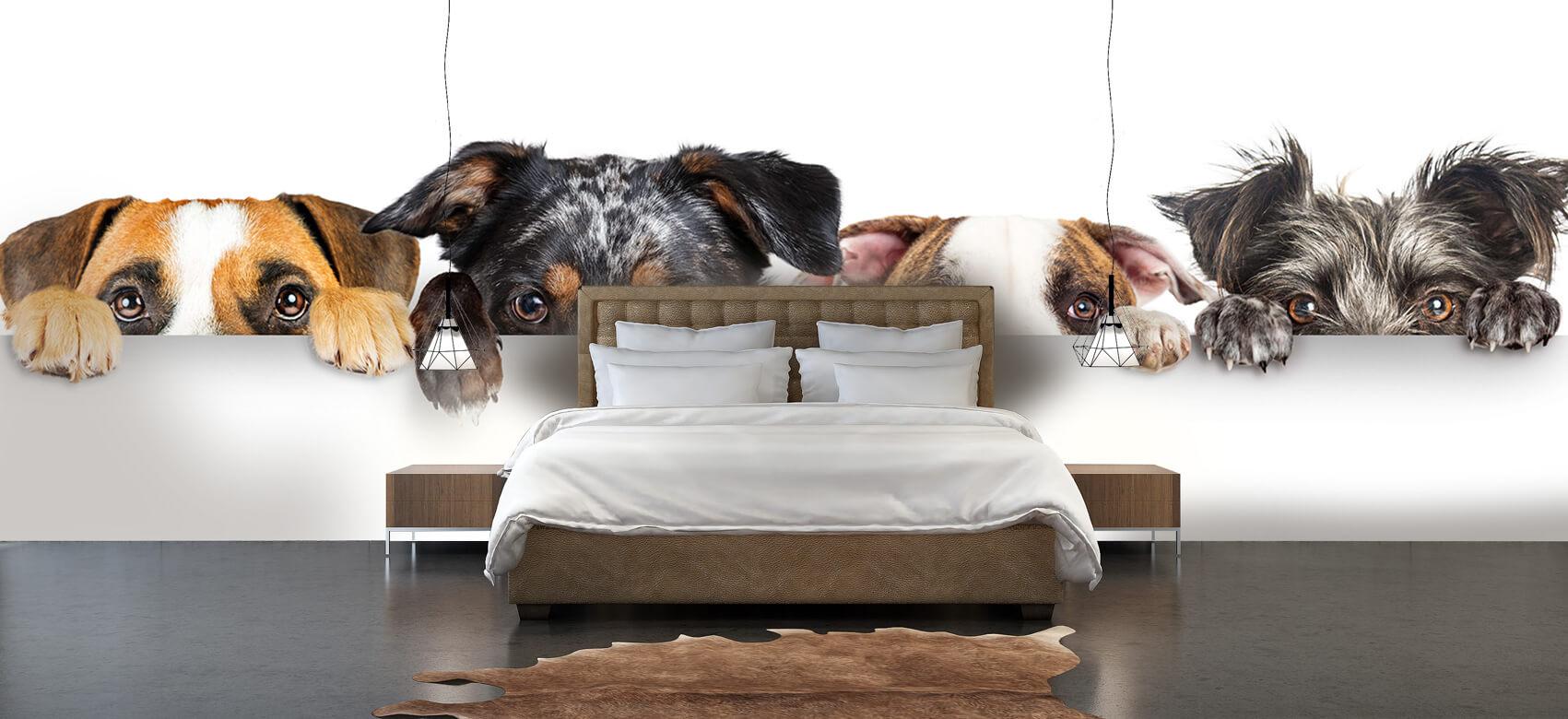 Dieren Glurende honden 3