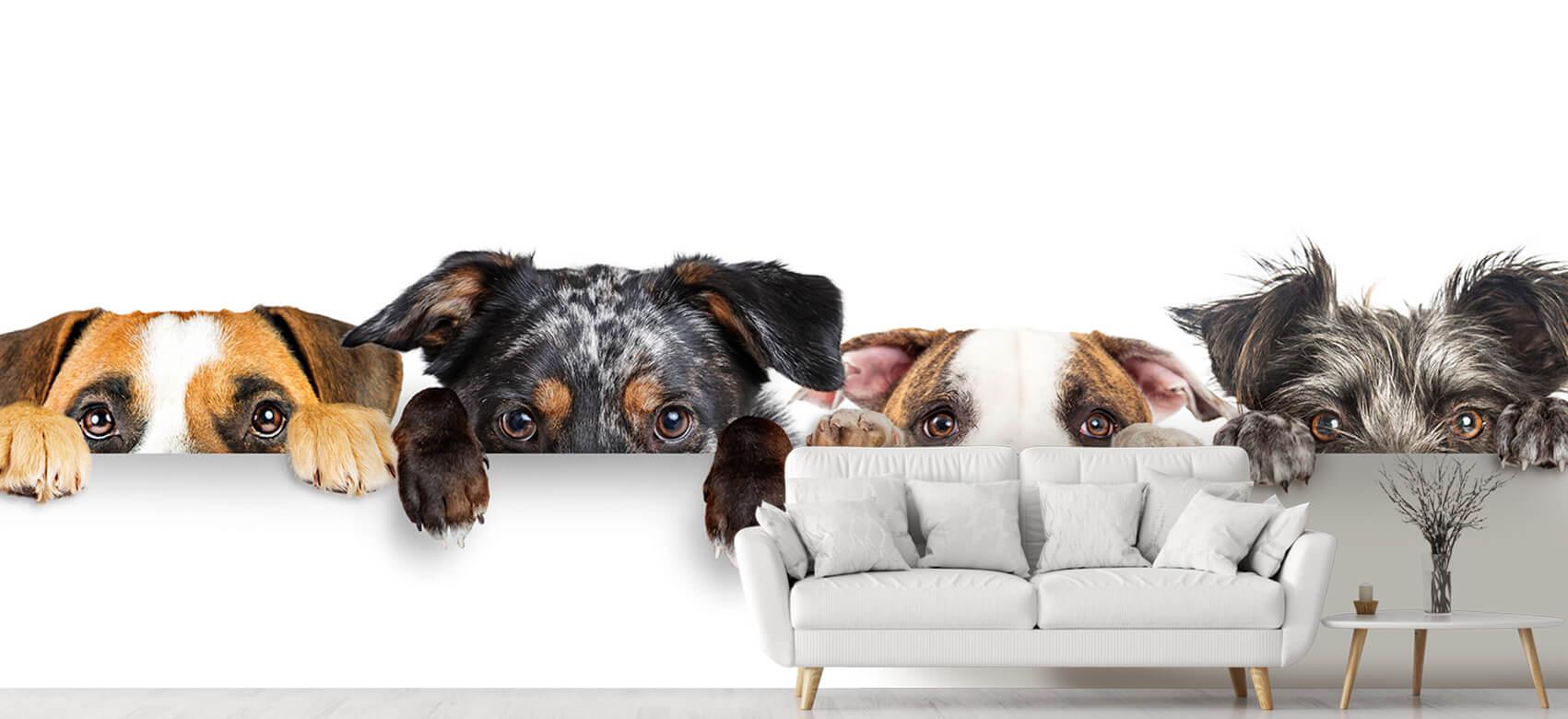 Dieren Glurende honden 5