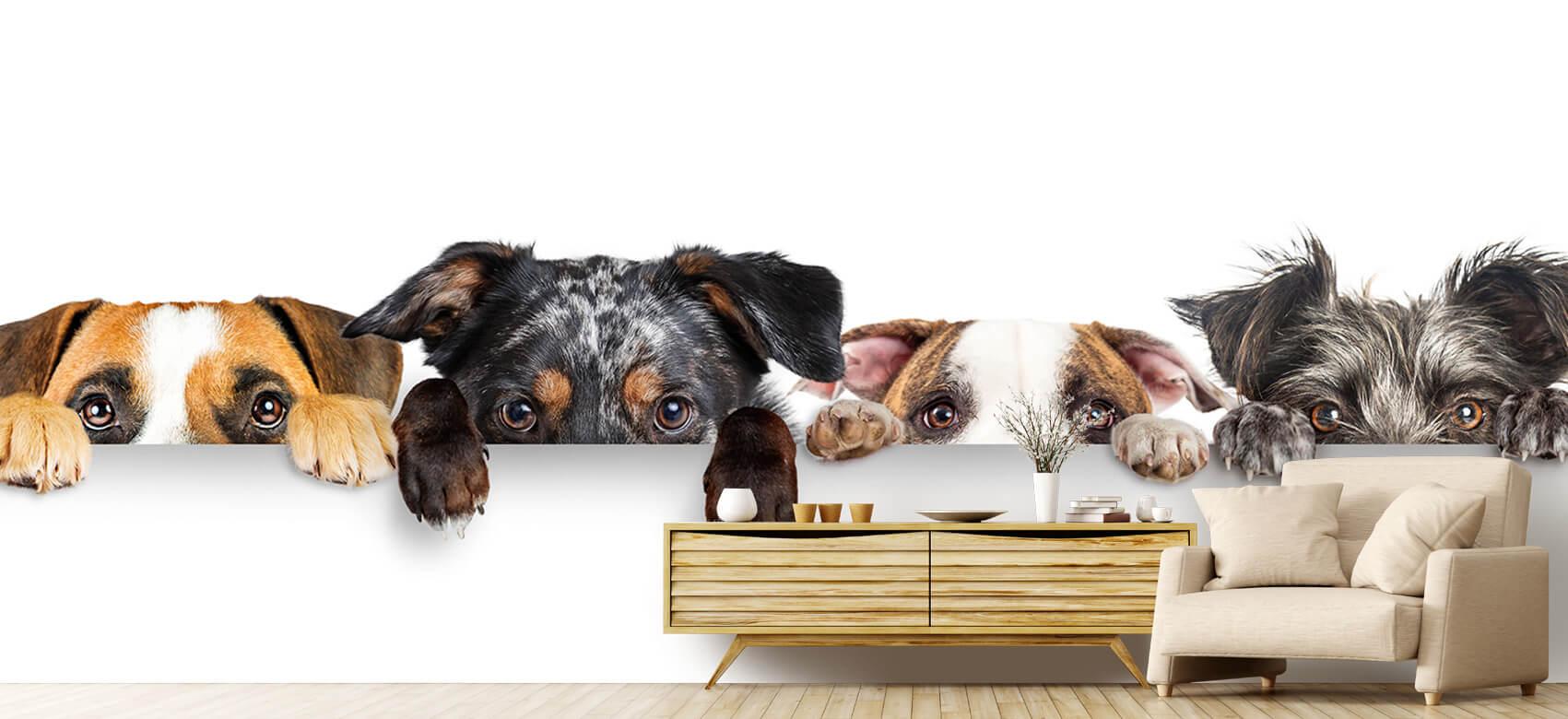 Dieren Glurende honden 6