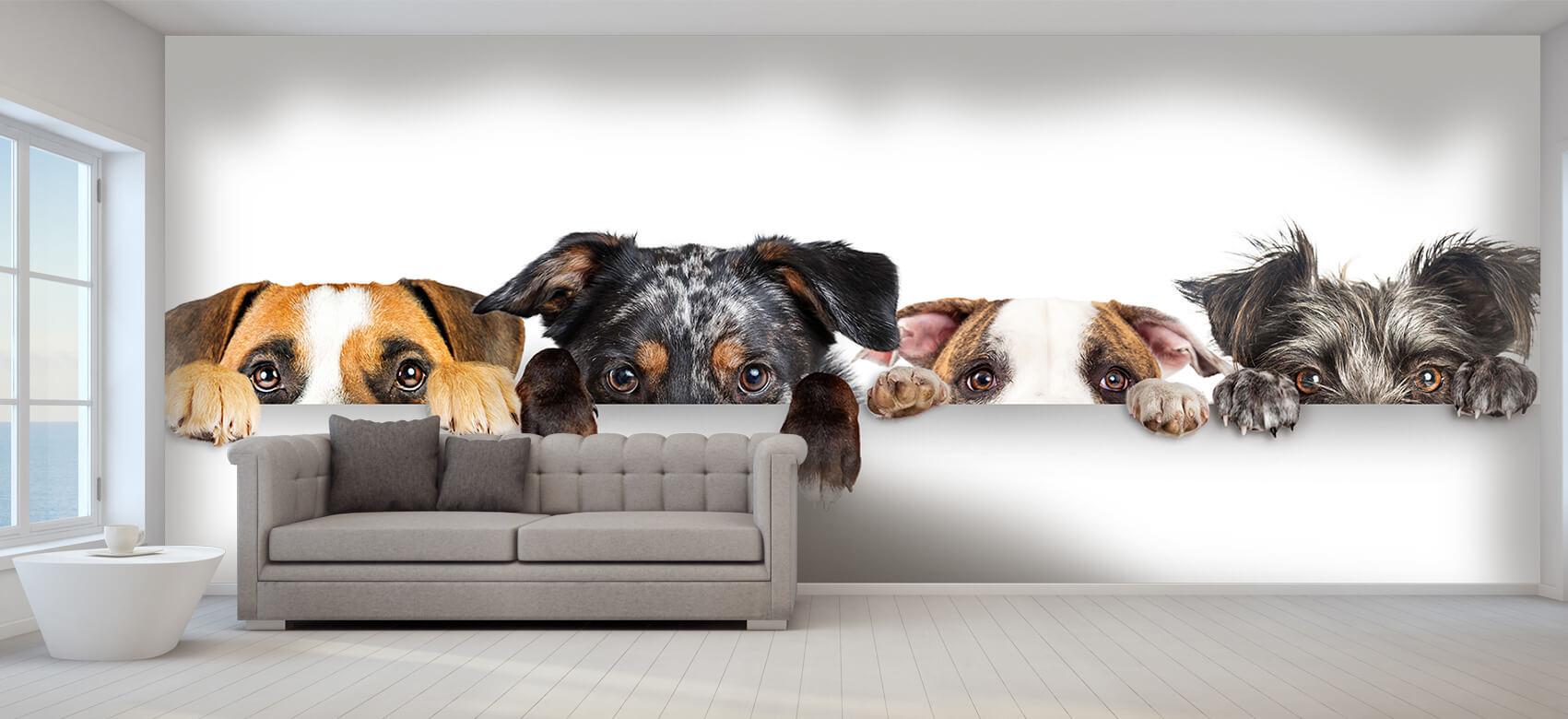 Dieren Glurende honden 8