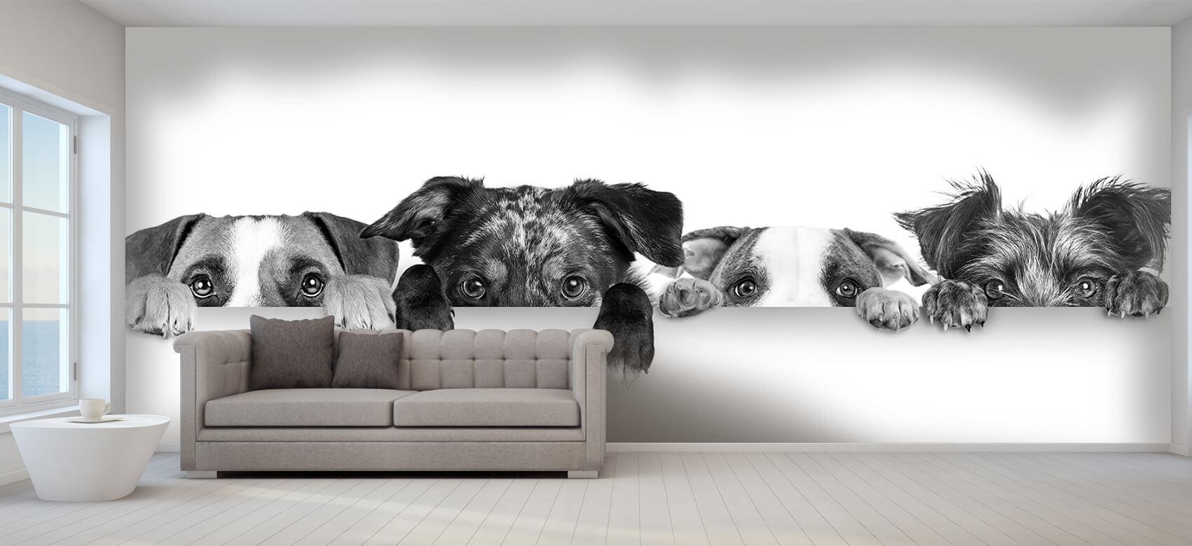 Dieren Glurende honden 9