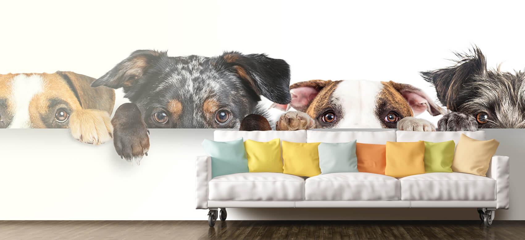 Dieren Glurende honden 10