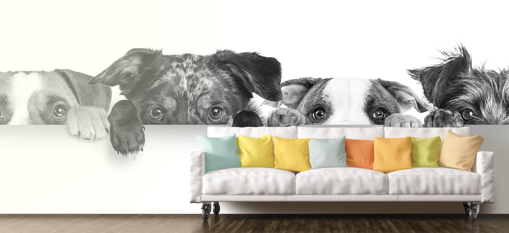 Dieren Glurende honden 11