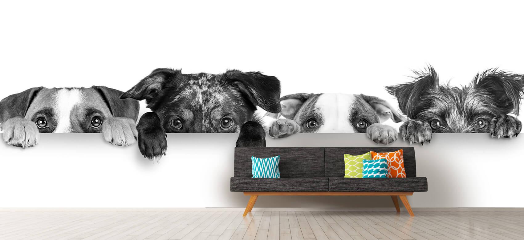Dieren Glurende honden 13