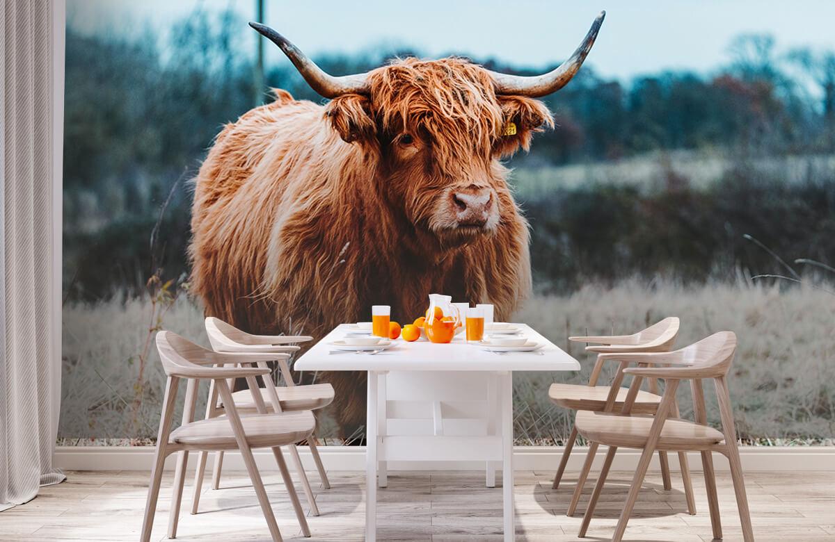 Dieren Schotse hooglander in het bos 2