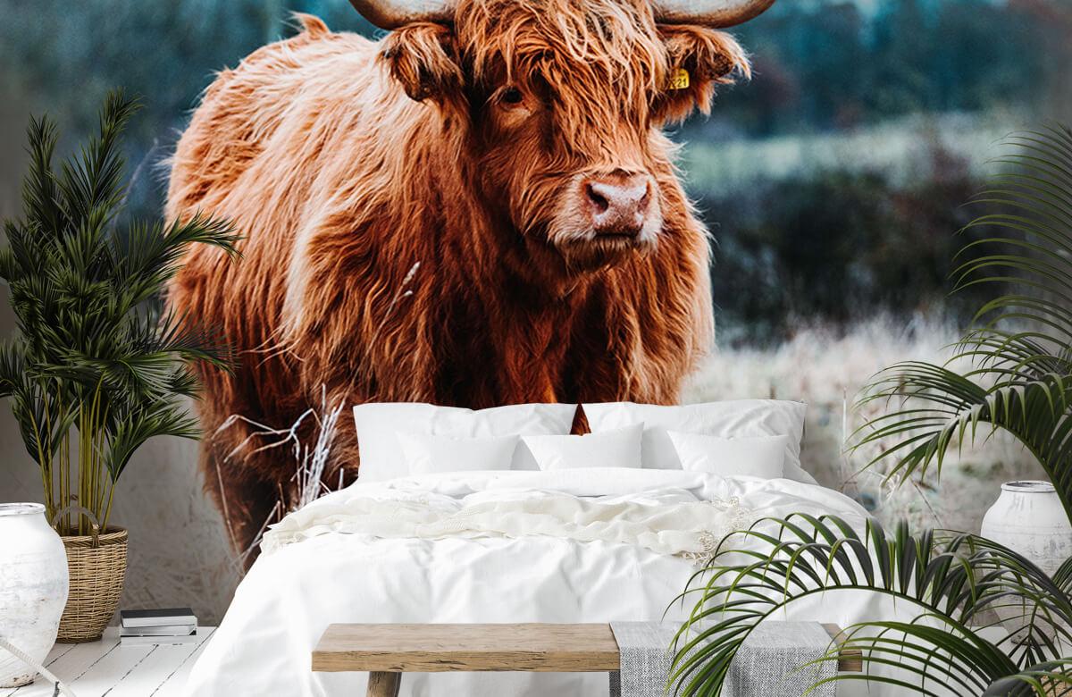 Dieren Schotse hooglander in het bos 6