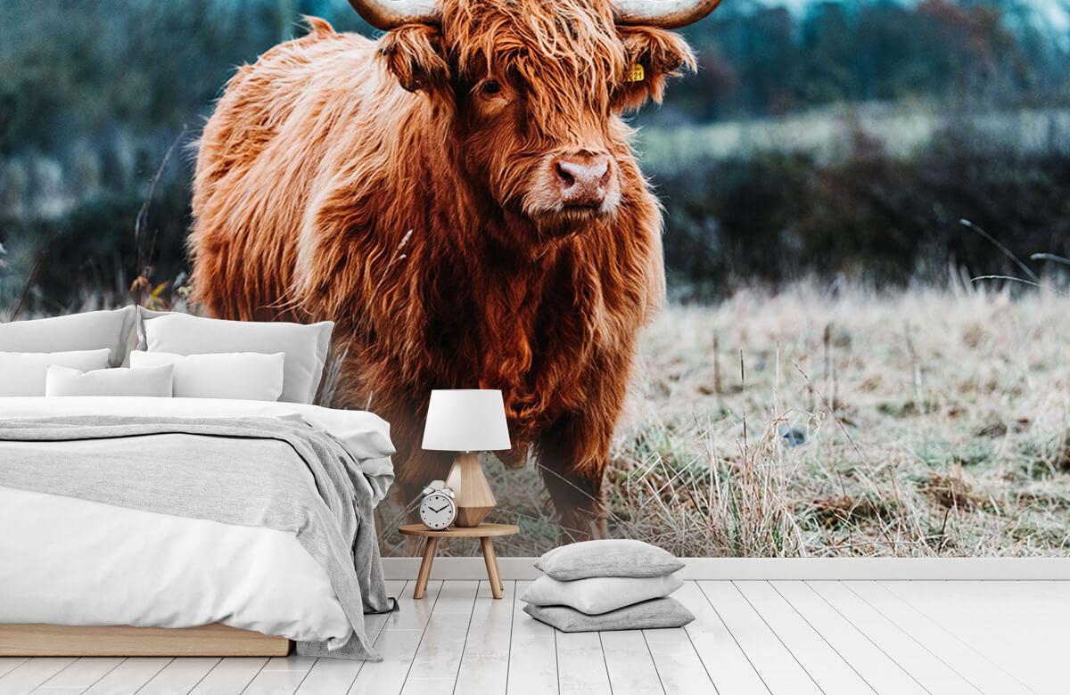 Dieren Schotse hooglander in het bos 7