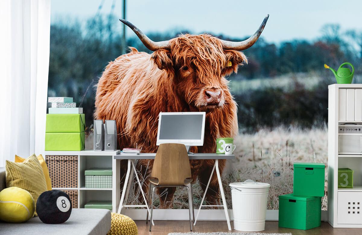 Dieren Schotse hooglander in het bos 9