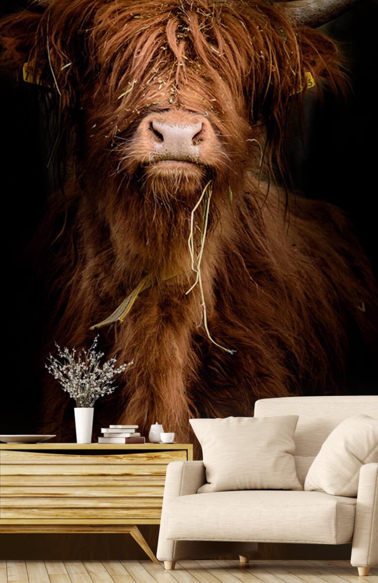 Dieren Portret Schotse hooglander 2