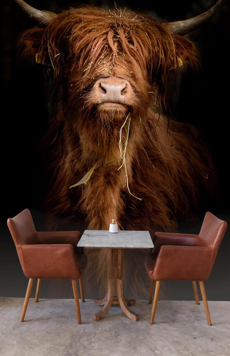 Dieren Portret Schotse hooglander 4