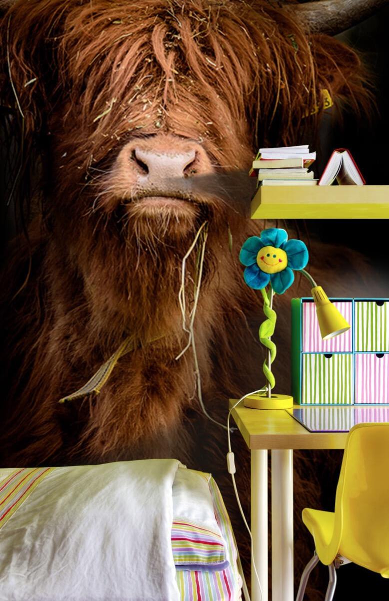 Dieren Portret Schotse hooglander 7