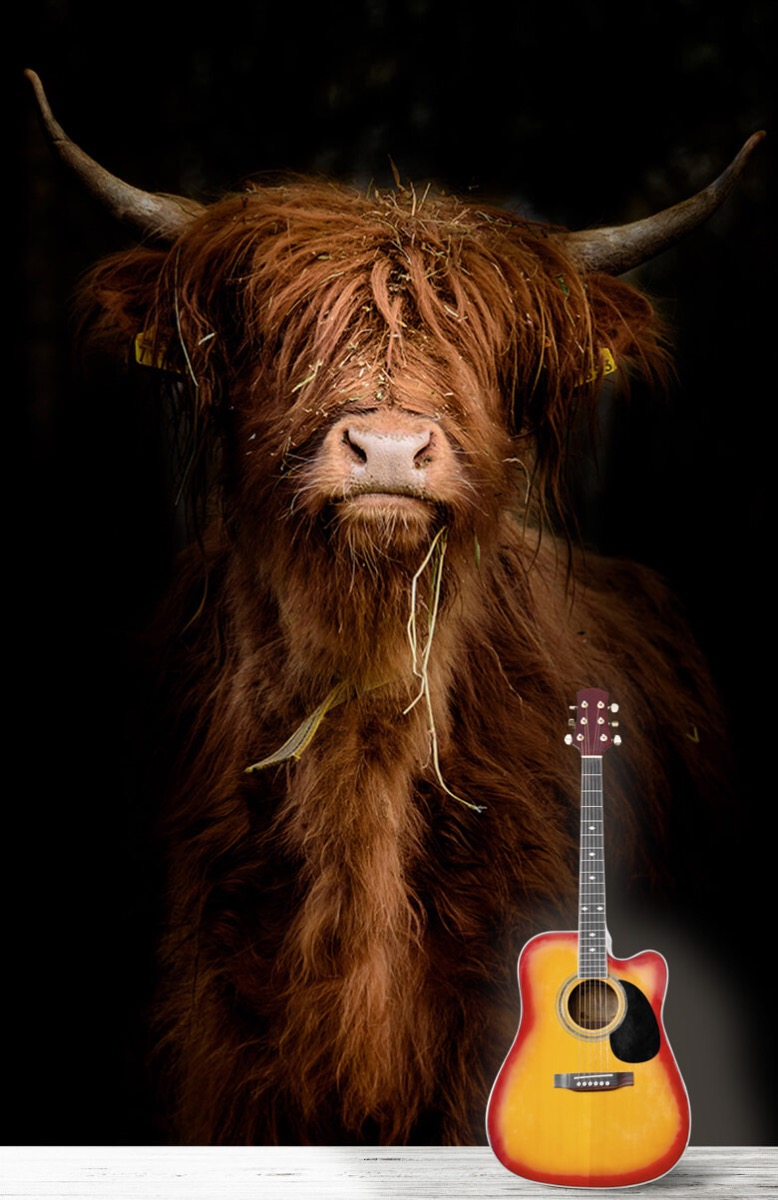 Dieren Portret Schotse hooglander 11
