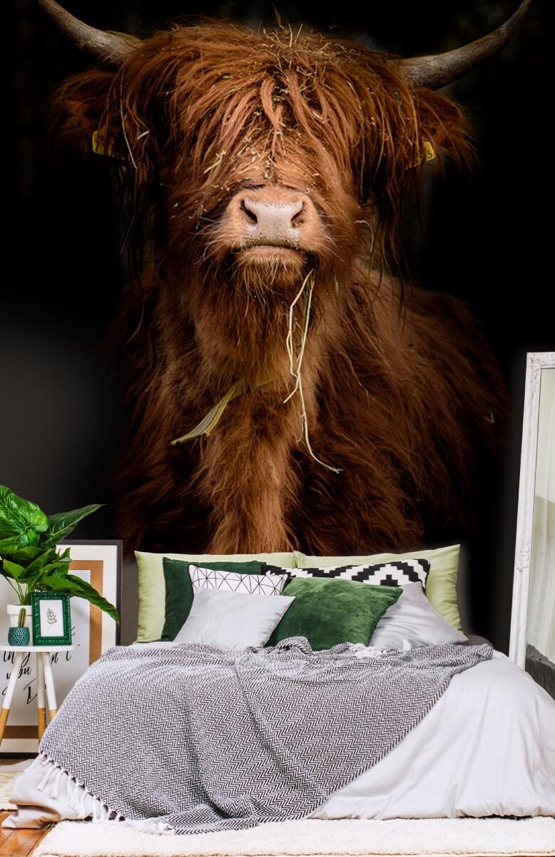 Dieren Portret Schotse hooglander 13