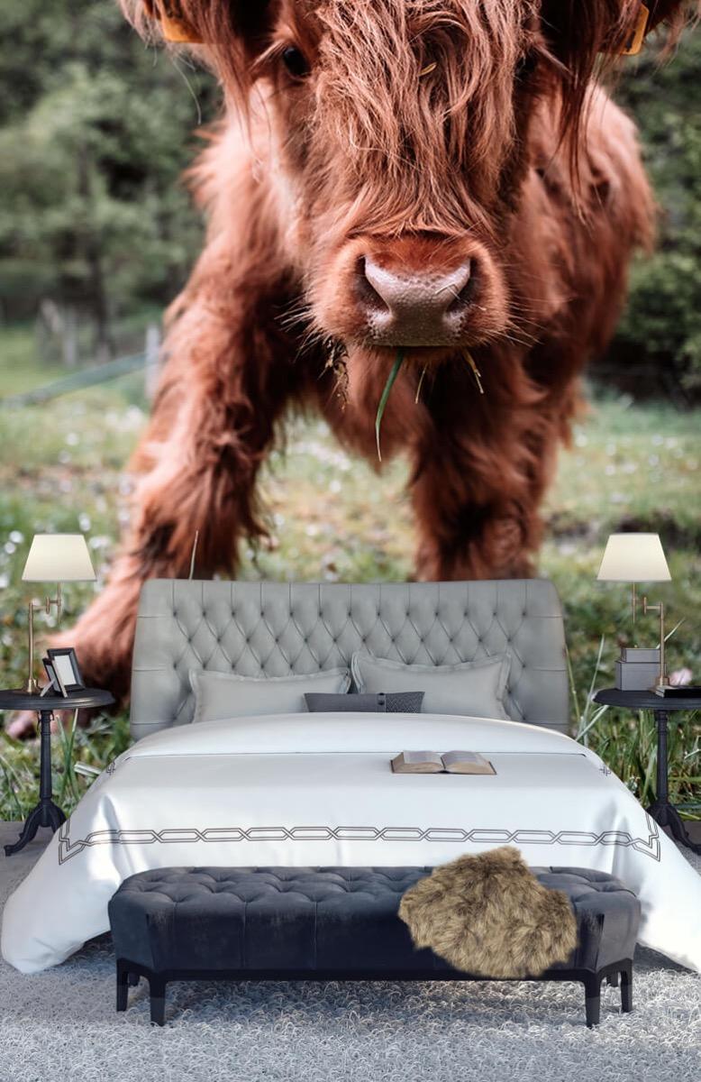 Dieren Schotse hooglander kalfje 1