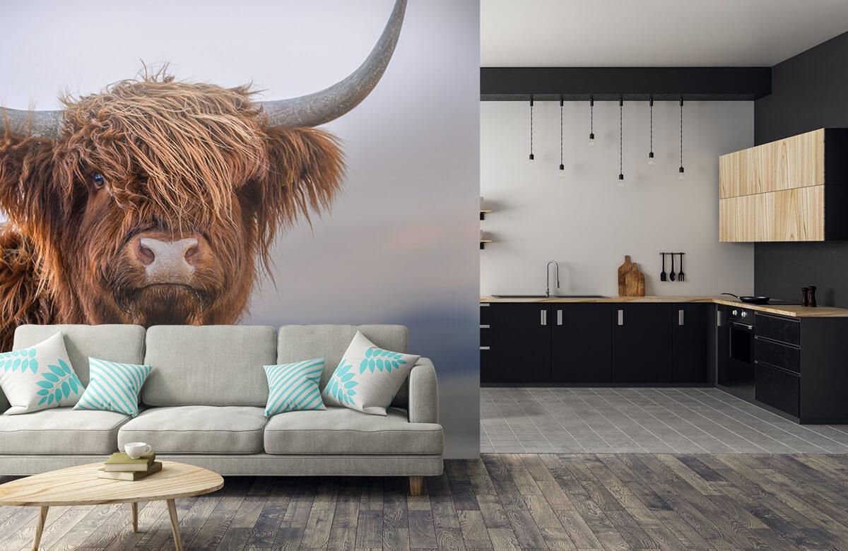 Dieren Starende Schotse hooglander 6
