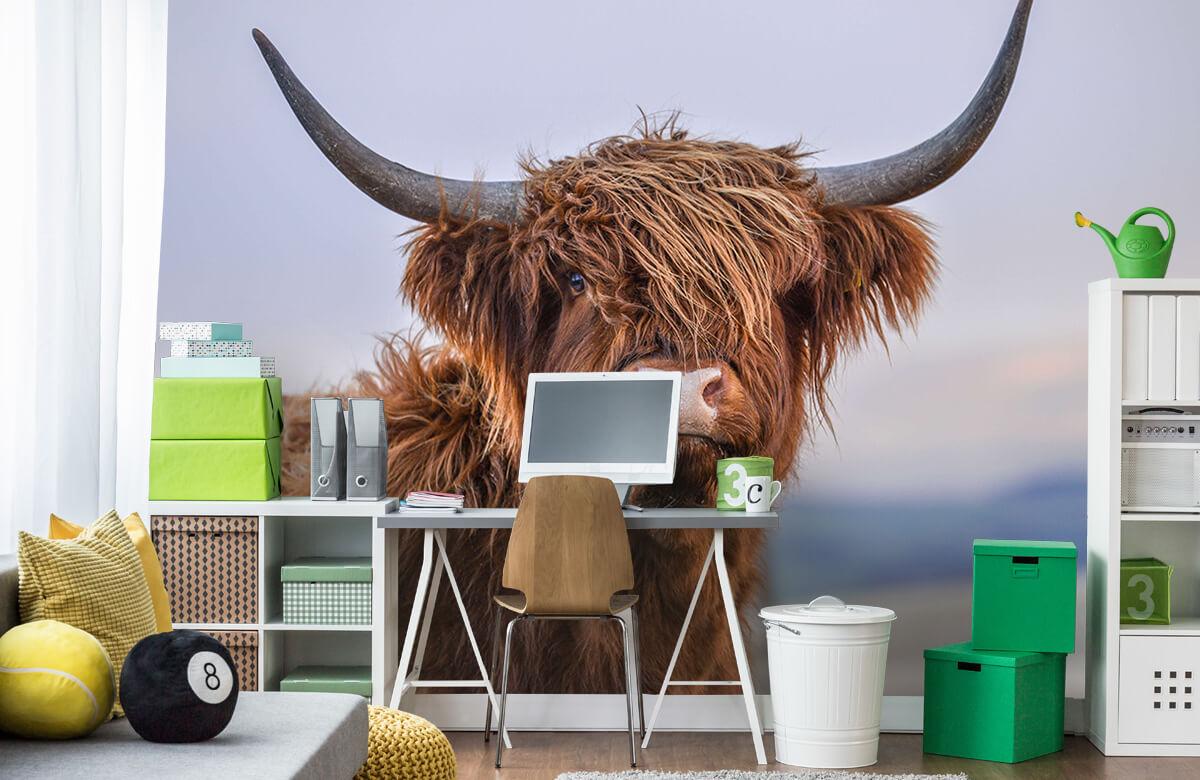 Dieren Starende Schotse hooglander 10