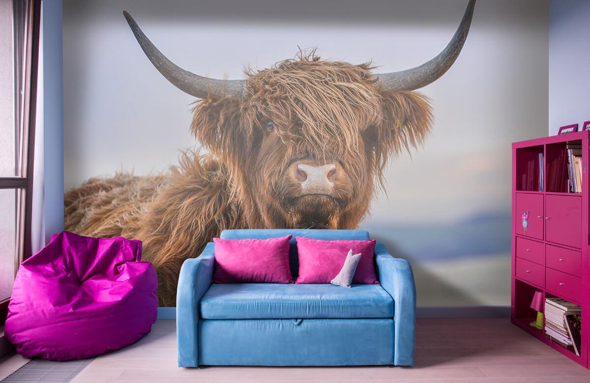 Dieren Starende Schotse hooglander 11