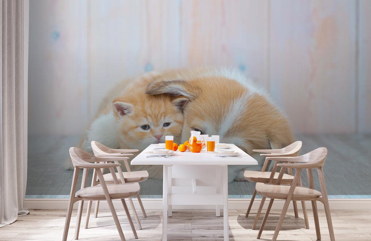 Dieren Poezen behang. Foto van een poesje en puppy. 2