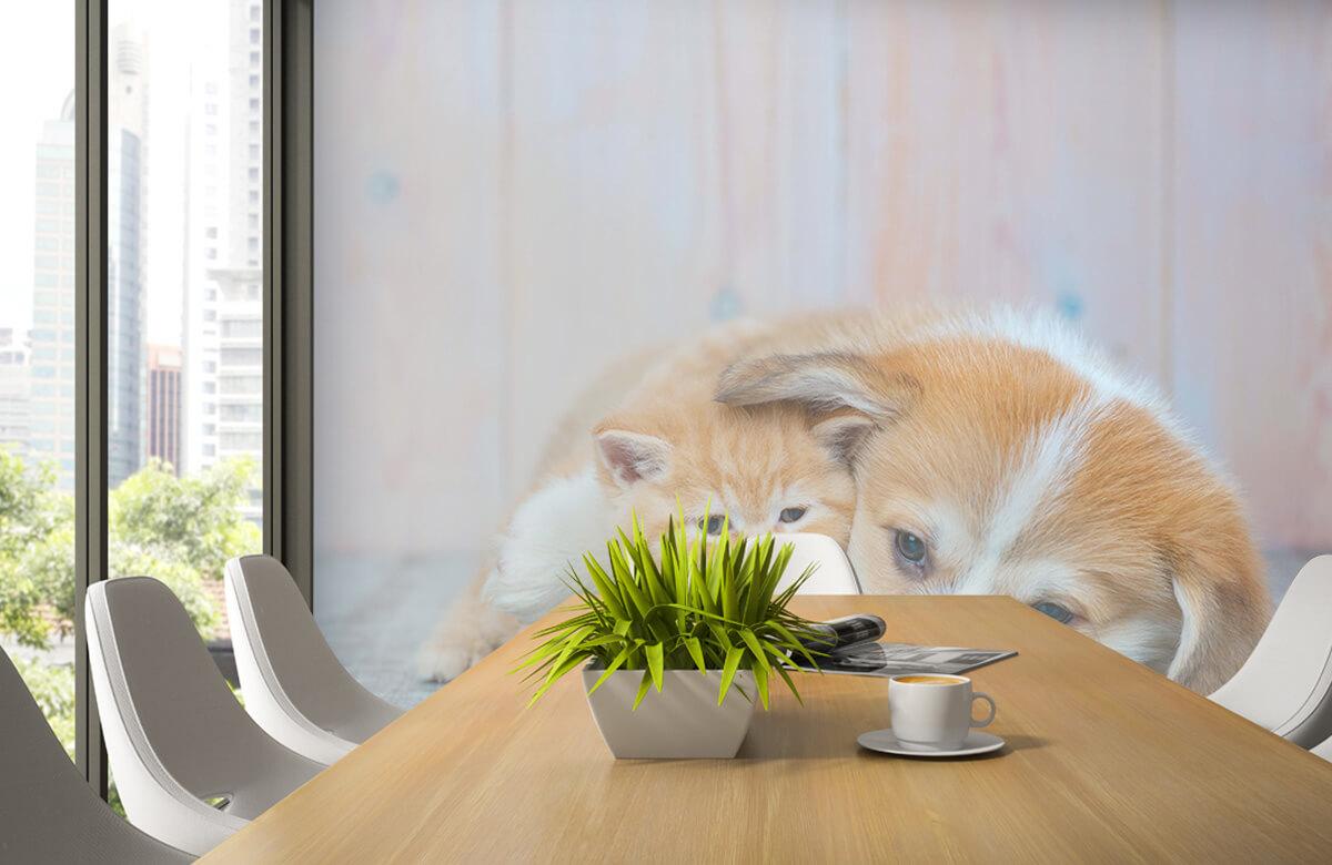 Dieren Poezen behang. Foto van een poesje en puppy. 3