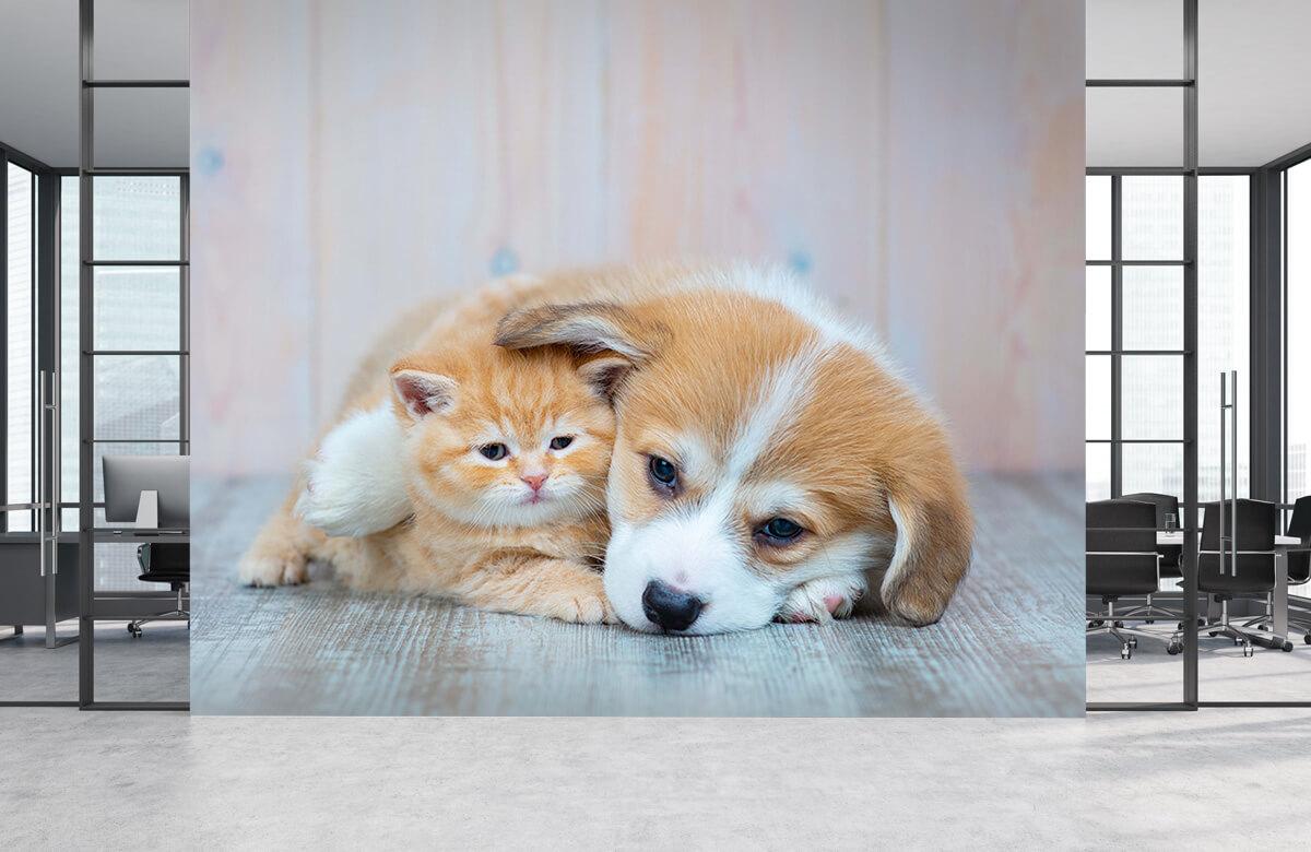 Dieren Poezen behang. Foto van een poesje en puppy. 4