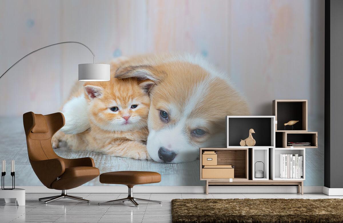 Dieren Poezen behang. Foto van een poesje en puppy. 5