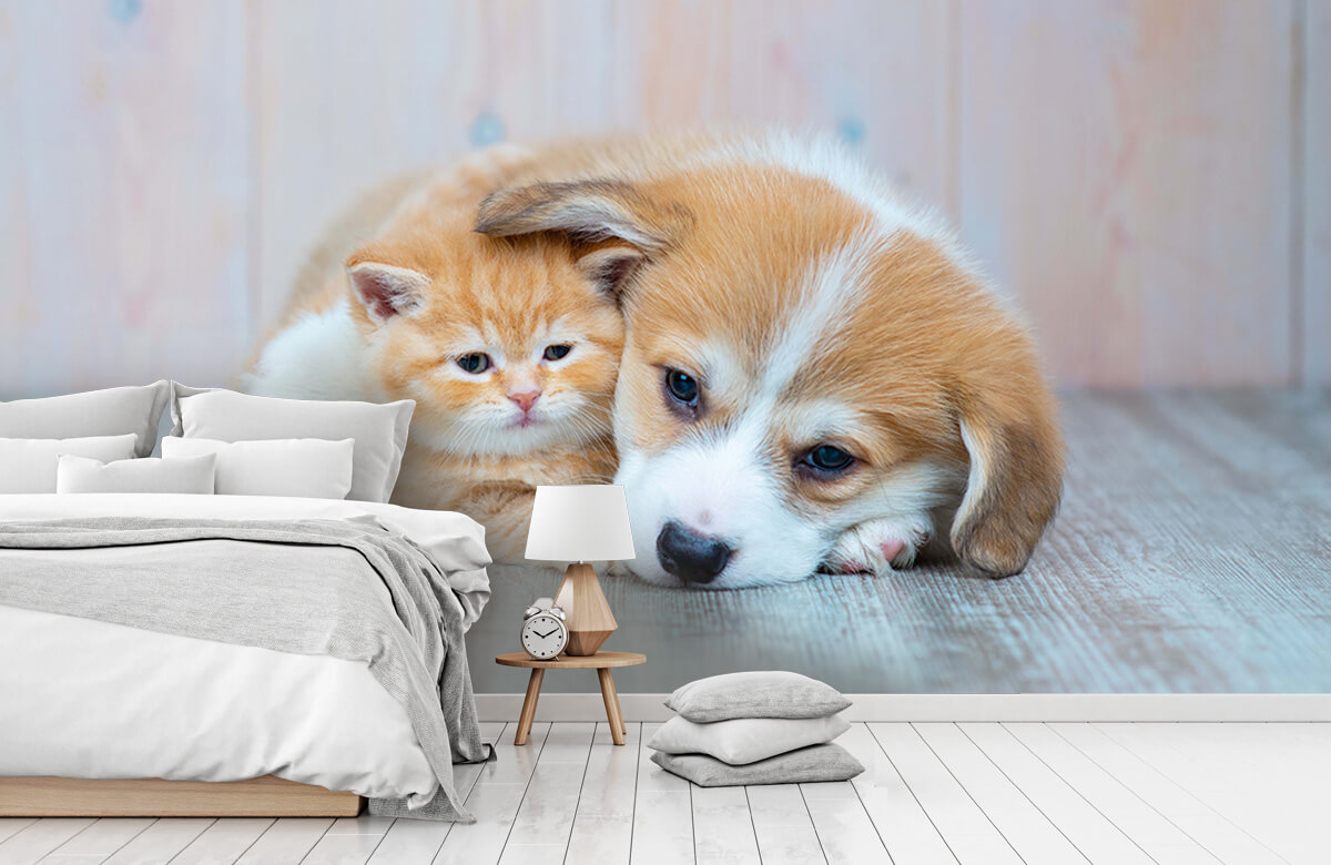 Dieren Poezen behang. Foto van een poesje en puppy. 1