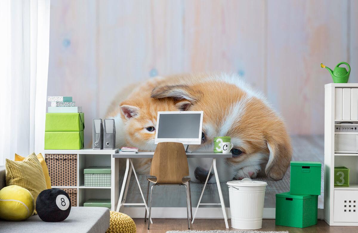 Dieren Poezen behang. Foto van een poesje en puppy. 9