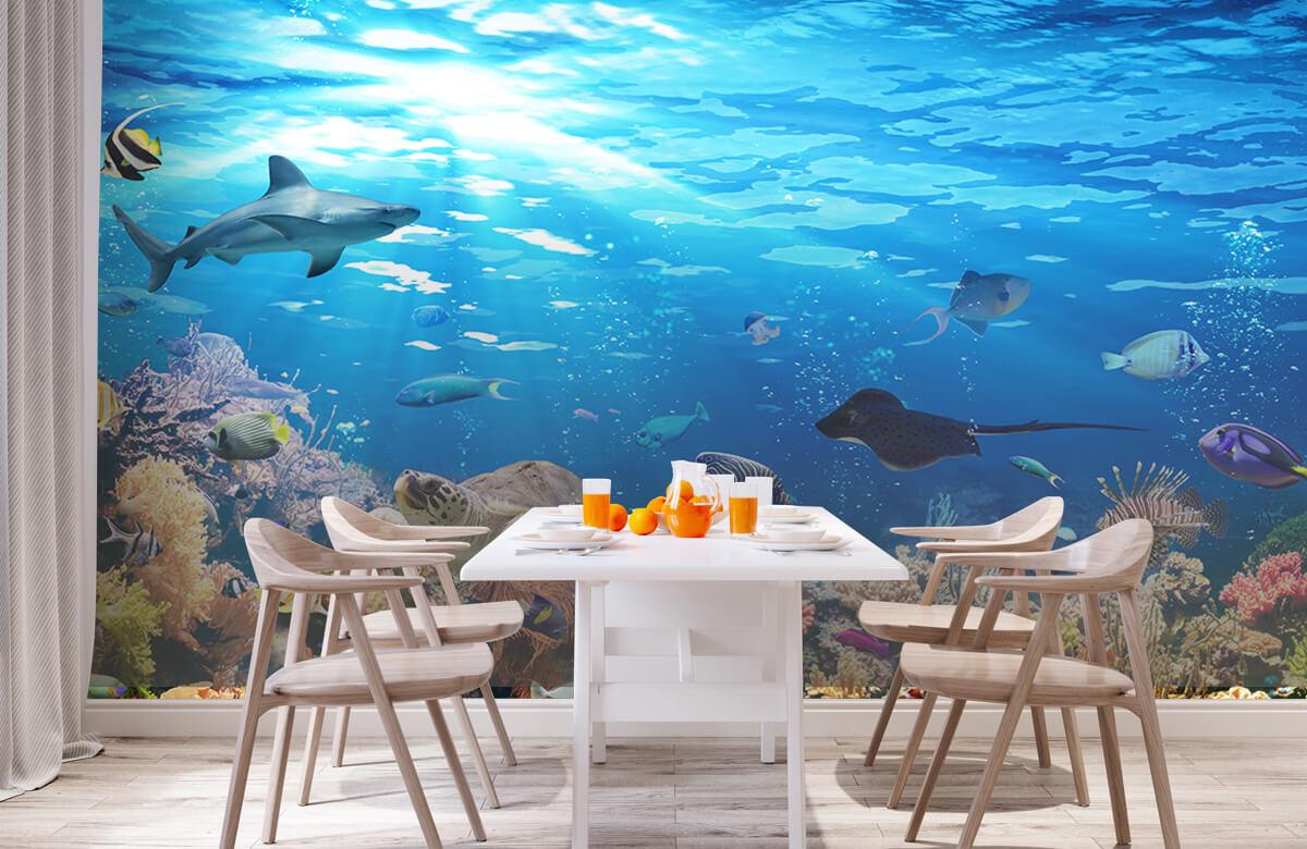 Dieren Exotische vissen 2