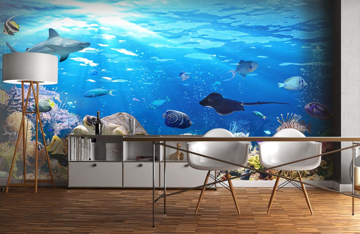 Dieren Exotische vissen 11