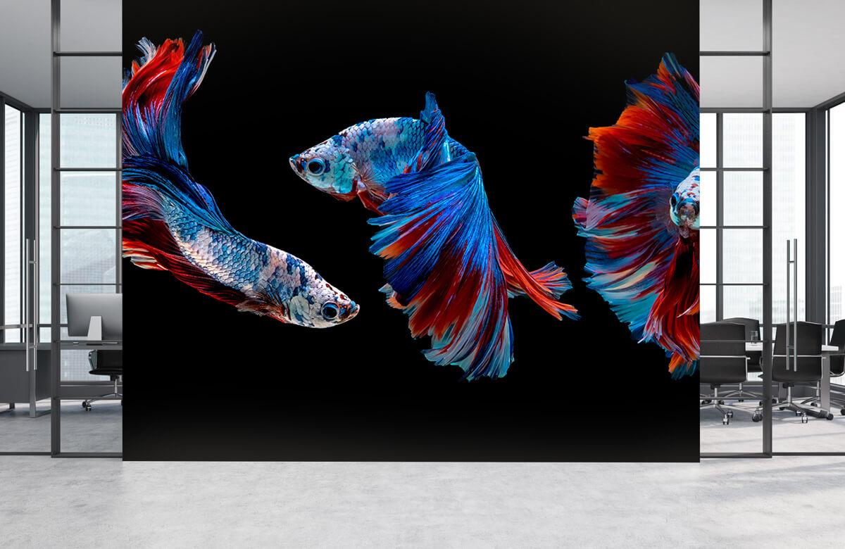Dieren Siamese vechtvissen 4