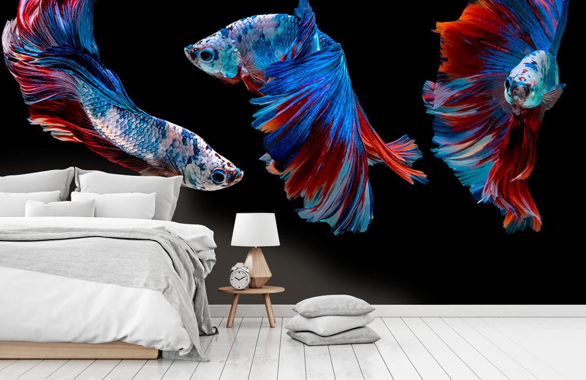 Dieren Siamese vechtvissen 8