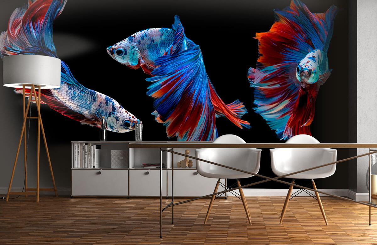 Dieren Siamese vechtvissen 11