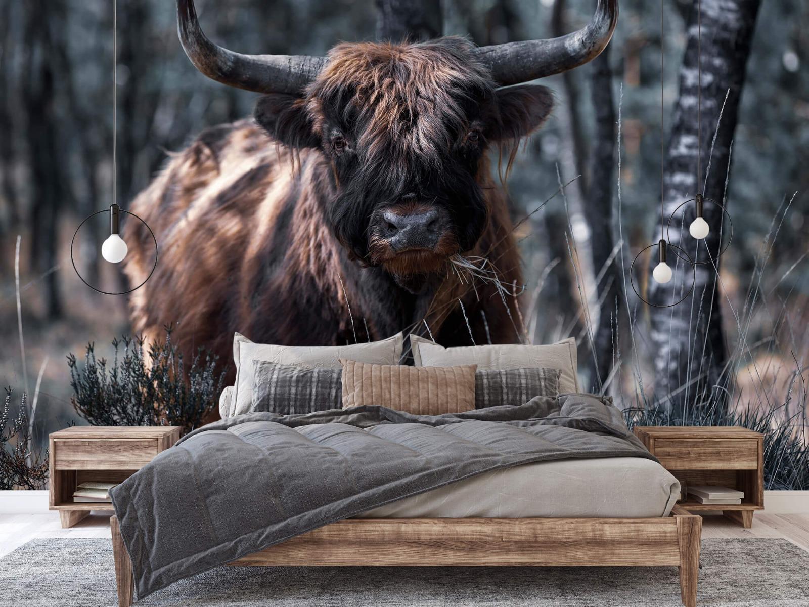 Hooglanders - Schotse hooglander - Woonkamer 2