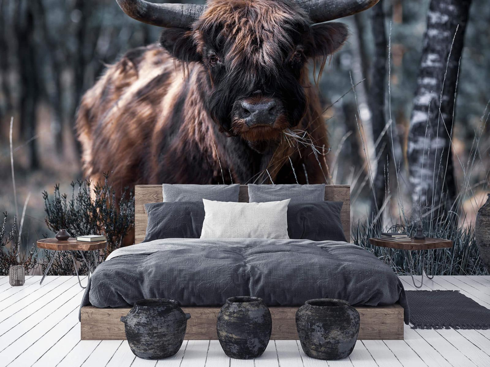 Hooglanders - Schotse hooglander - Woonkamer 5