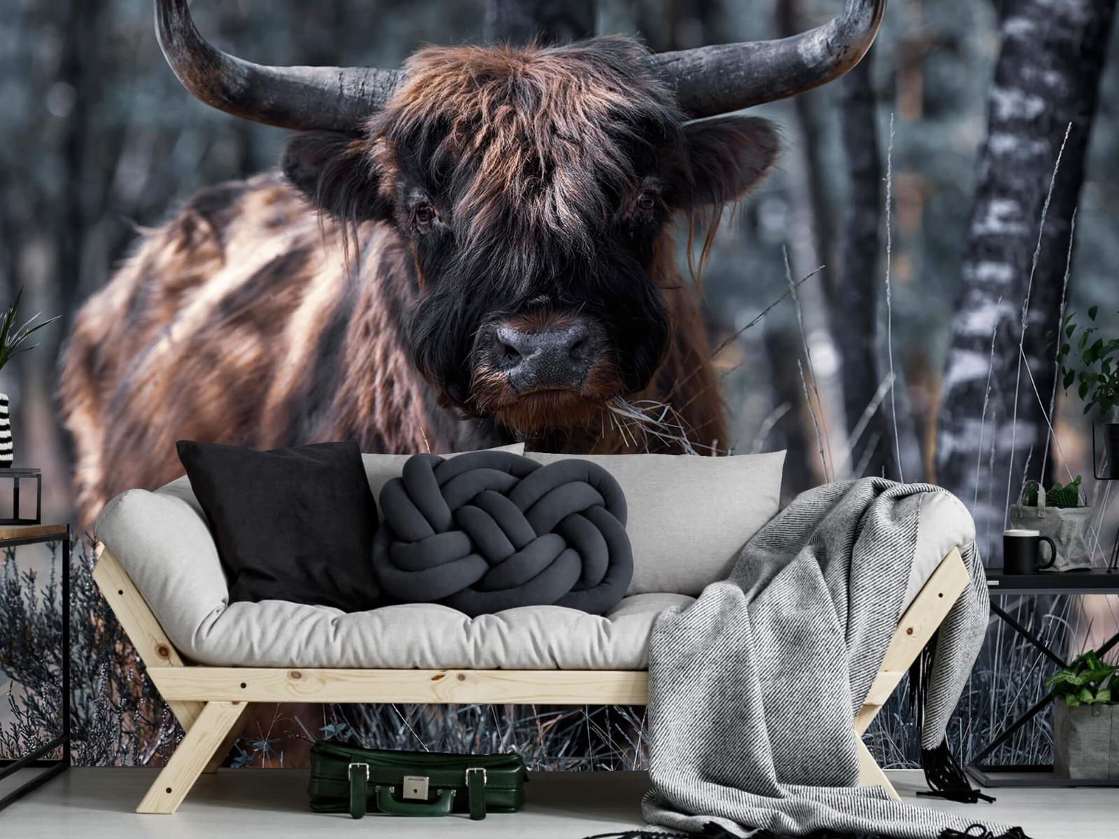 Hooglanders - Schotse hooglander - Woonkamer 6